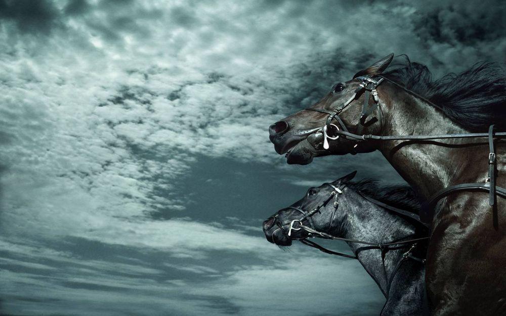 Скачивание изображения: скачки, лошади 235095 / Разрешение: original / Раздел: Животные / HallPic.ru
